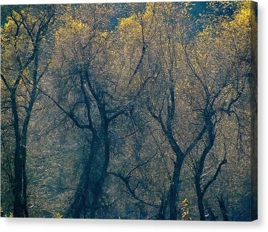 Mystic Trees Canvas Print