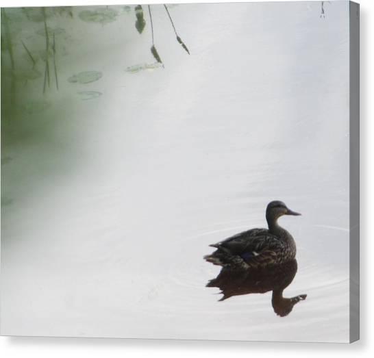 Mystical Duck Canvas Print by Nancy TeWinkel Lauren