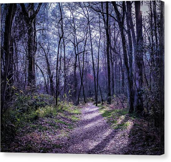 Mystical Trail Canvas Print