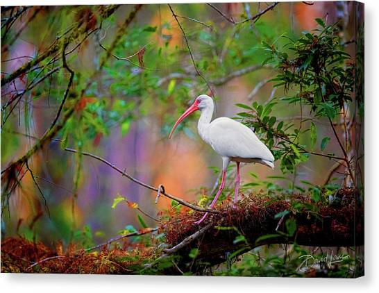 Mystical White Ibis Canvas Print