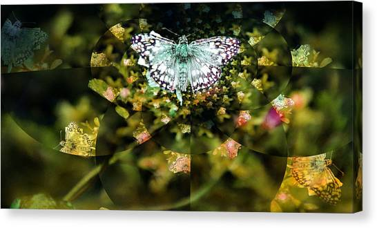 Mythical Butterfly  Canvas Print