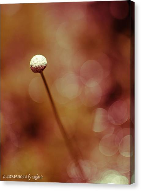 Naked Dandelion Canvas Print