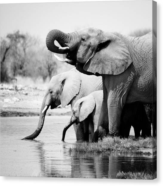 Namibia Elephants Canvas Print by Nina Papiorek