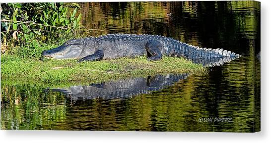 Canvas Print - Nap Time by Don Durfee