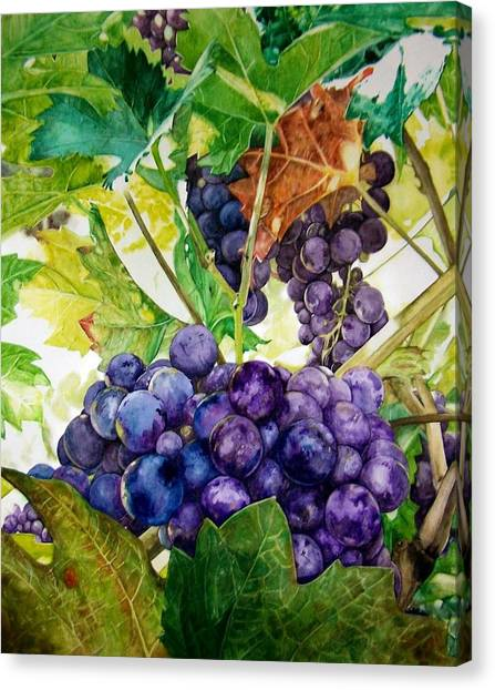 Napa Harvest Canvas Print