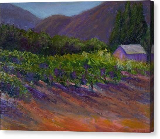 Napa Vineyard Canvas Print by Bonnie Hanly