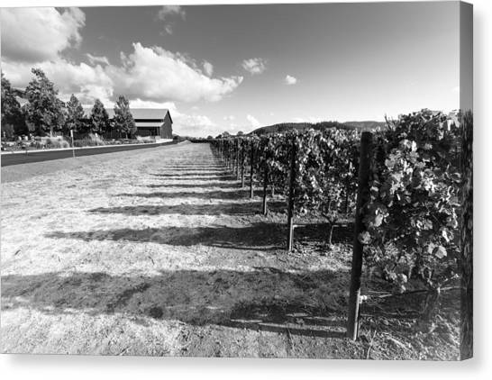 Black and white vineyard canvas print napa winery rows by paul scolieri