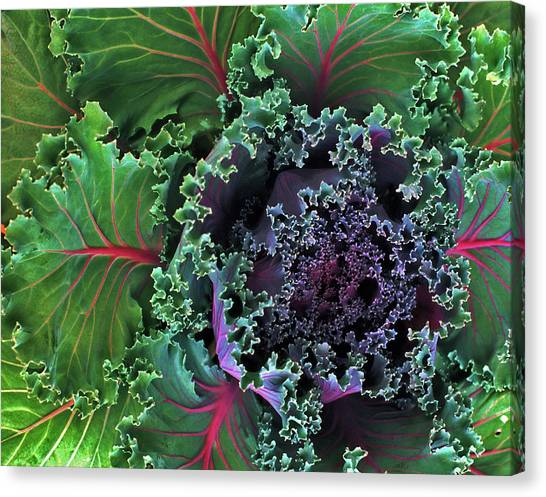 Naples Kale Canvas Print