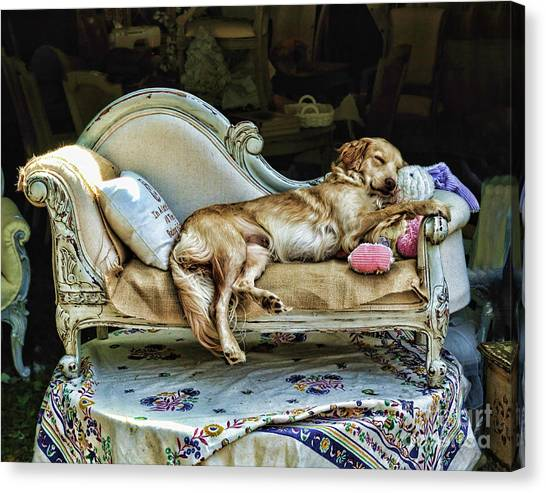 Napping Dog Promo Canvas Print