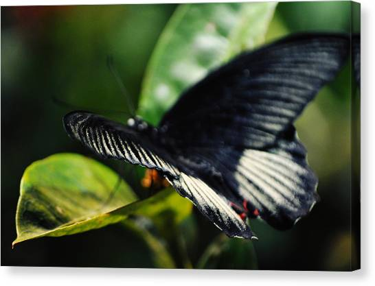 Smithsonian Institute Canvas Print - National Butterfly Pavilion by Kyle Hanson