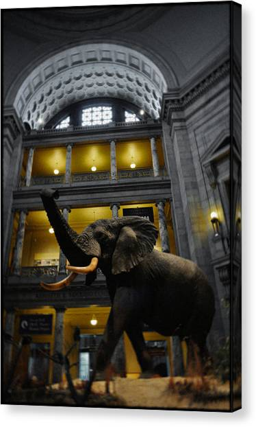Smithsonian Institute Canvas Print - National Museum Of Natural History African Elephant Portrait by Kyle Hanson