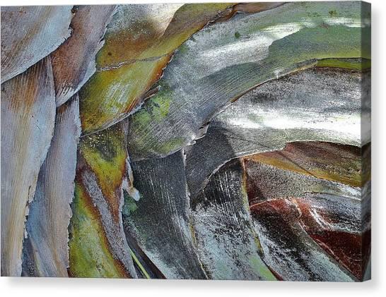 Natural 4 15 Canvas Print