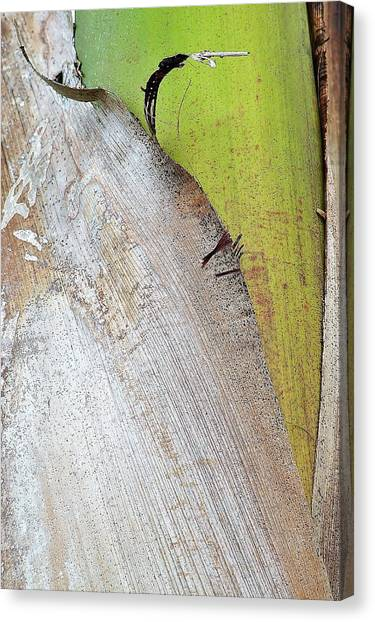Natural 8 15c Canvas Print