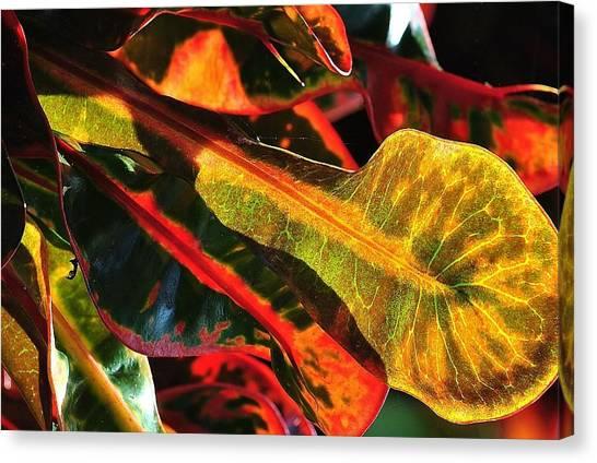 Natural 9 17c Canvas Print