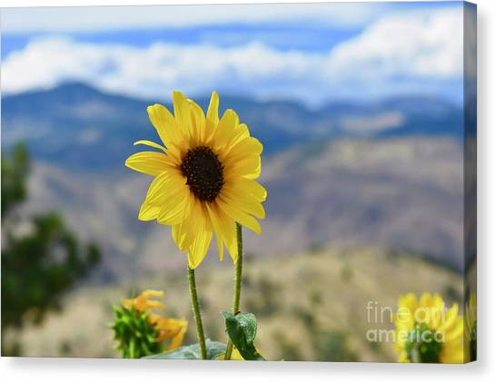 Colorado State University Canvas Print - Natural Beauty  by Lisa Kleiner