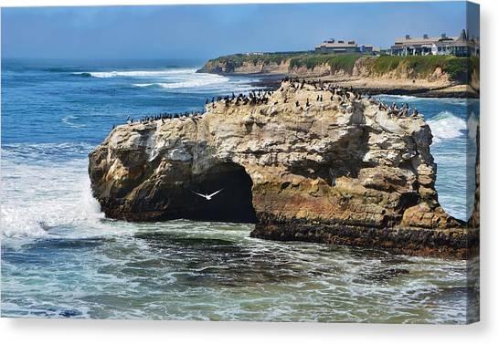Natural Bridges Santa Cruz Canvas Print