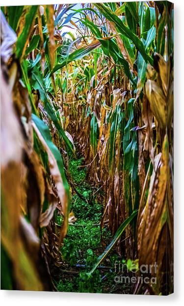 Corn Maze Canvas Print - Natural Corn Maze by Jordan Erhardt