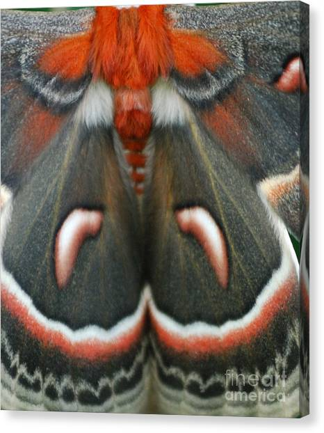 Natural Creation Canvas Print