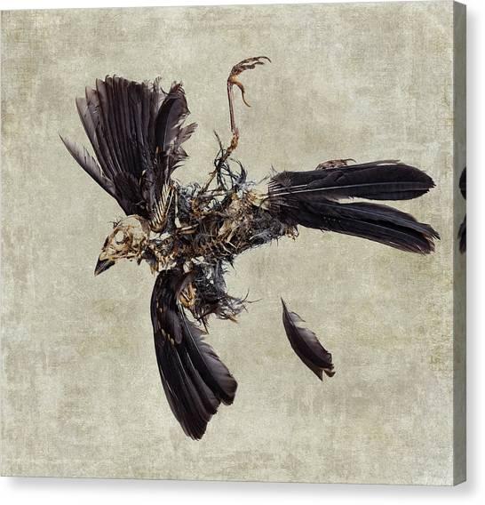 Carcass Canvas Print - Natural Cycle by Carol Leigh