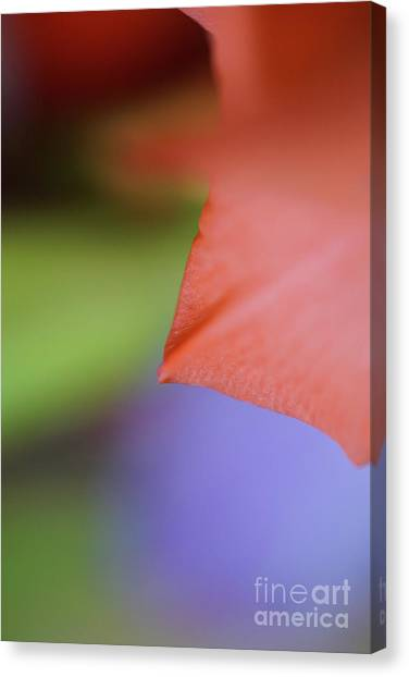 Natural Primary Colors Canvas Print