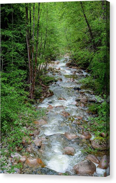 Naturally Pure Stream Backroad Discovery Canvas Print