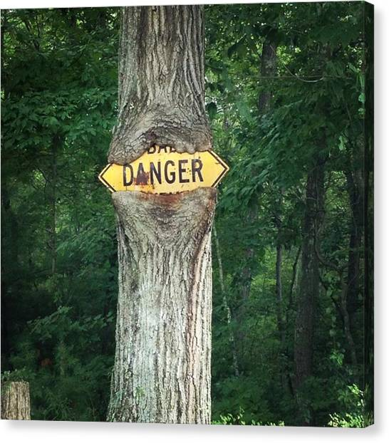 Roads Canvas Print - Danger - Sign-eating Tree Ahead by Jason Freedman