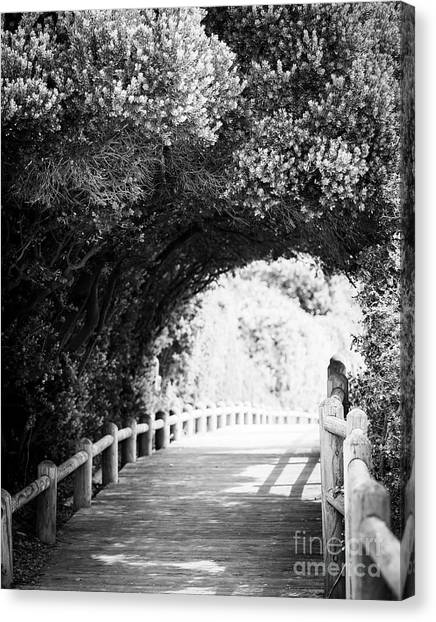 Canvas Print featuring the photograph Nature Boardwalk Black And White by Tim Hester