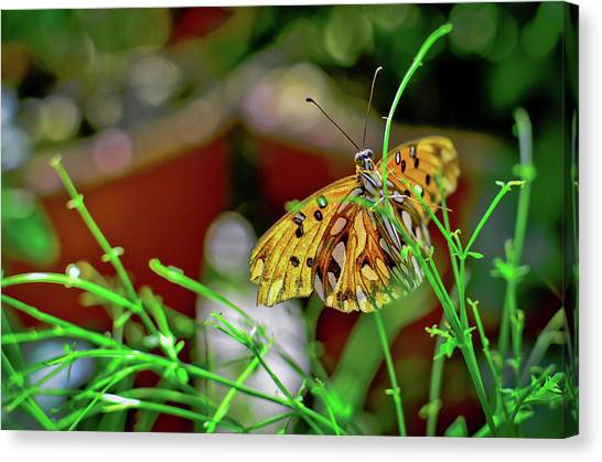 Nature - Butterfly And Plants Canvas Print