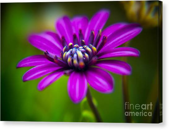 Nature Explosion Canvas Print by Alessandro Giorgi Art Photography