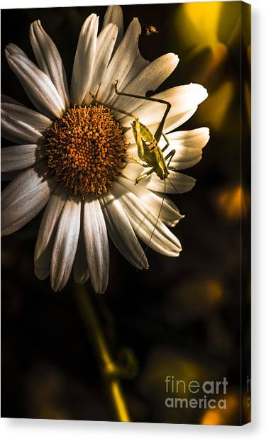 Grasshoppers Canvas Print - Nature Fine Art Summer Flower With Insect by Jorgo Photography - Wall Art Gallery