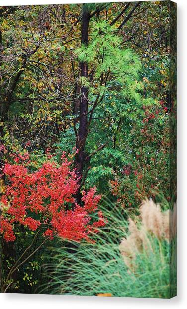 Nature In All Her Beauty Canvas Print by Trudi Southerland