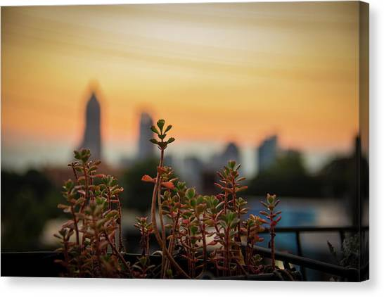 Nature In The City Canvas Print