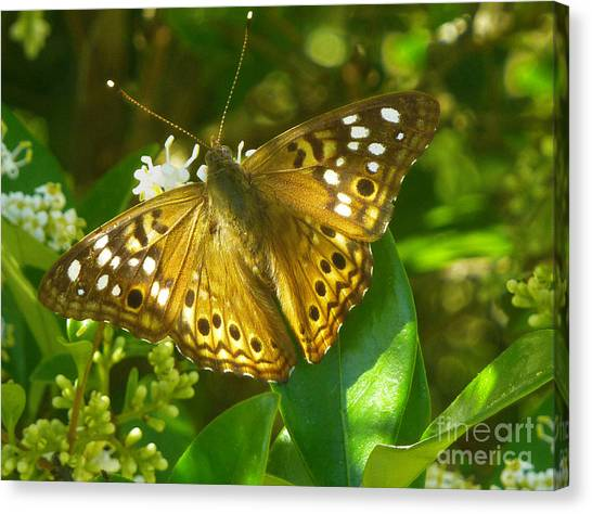 Nature In The Wild - Kaleidoscope Of Color Canvas Print by Lucyna A M Green
