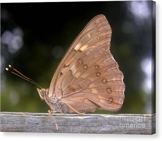 Nature In The Wild - The Autumn Migrant Canvas Print by Lucyna A M Green