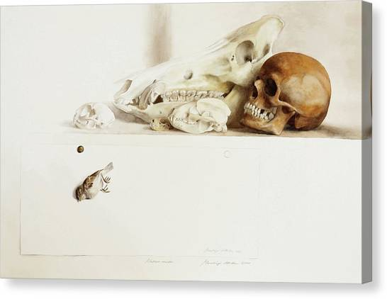 Nature Morte Canvas Print