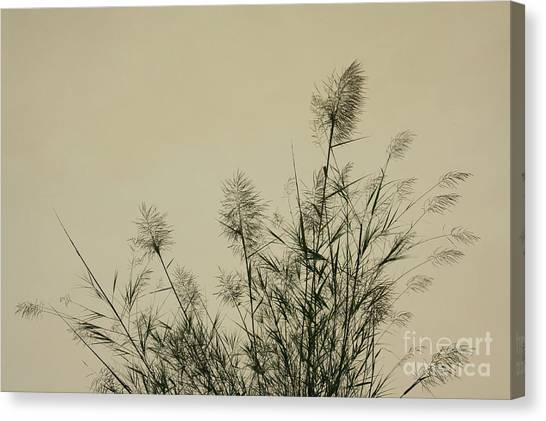 Nature Scenery In Lijiang China Canvas Print by Julia Hiebaum