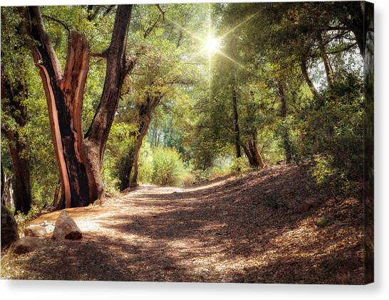 Canvas Print featuring the photograph Nature Trail by Alison Frank