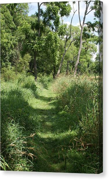 Nature Trail Canvas Print by Heather Green