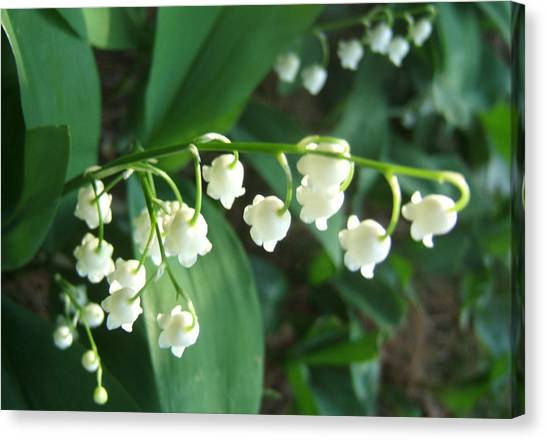 Canvas Print - Natures Bells by Lisa Roy