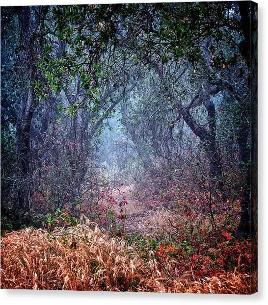 Nature's Chaos, Arroyo Grande, California Canvas Print