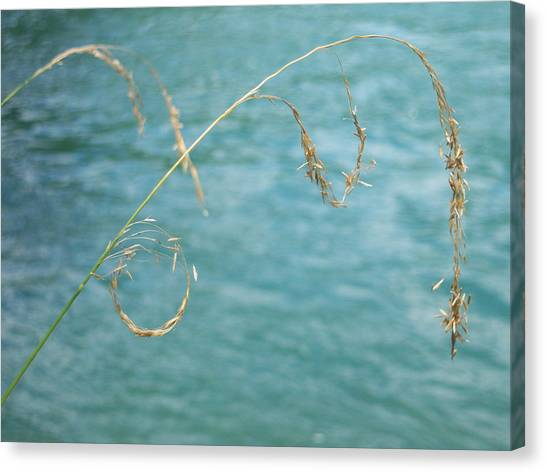 Nature's Circle Art Canvas Print by Ken Day