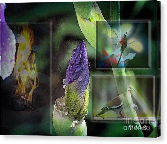 Natures Collage Canvas Print