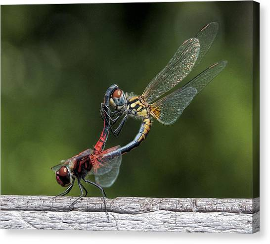 Nature's Color Canvas Print
