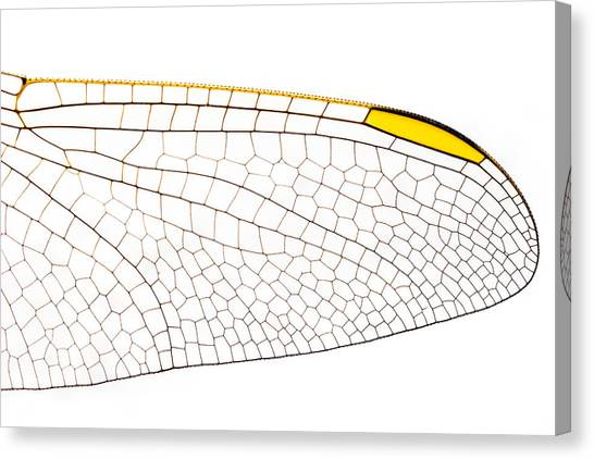 Canvas Print featuring the photograph Nature's Engineering Designs by Yogendra Joshi