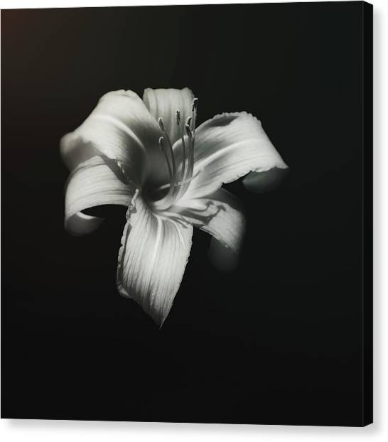 Lilies Canvas Print - Natures Fireworks by Scott Norris