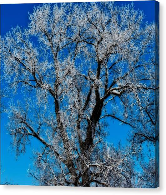 Canvas Print featuring the photograph Natures Lace by Edward Peterson