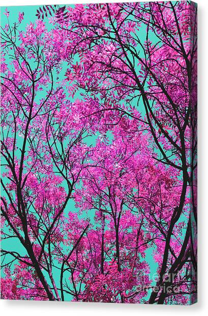 Natures Magic - Pink And Blue Canvas Print
