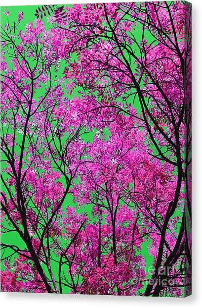 Natures Magic - Pink And Green Canvas Print