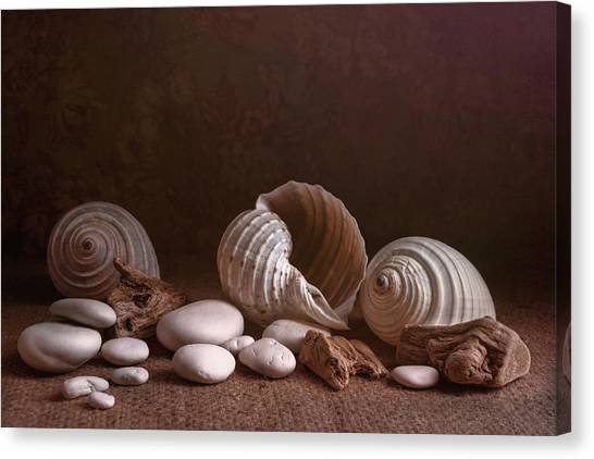 Conch Canvas Print - Natures Objects Still Life by Tom Mc Nemar