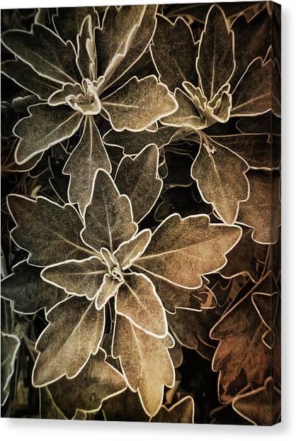Natures Patterns Canvas Print